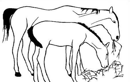 Cavallo da colorare 46