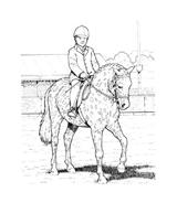 Cavallo da colorare 47