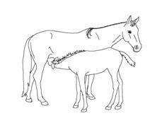 Cavallo da colorare 49