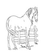 Cavallo da colorare 59