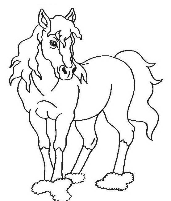 Cavallo da colorare 62