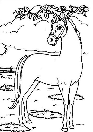 Cavallo da colorare 80