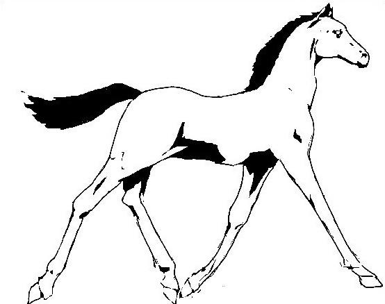 Cavallo da colorare 83