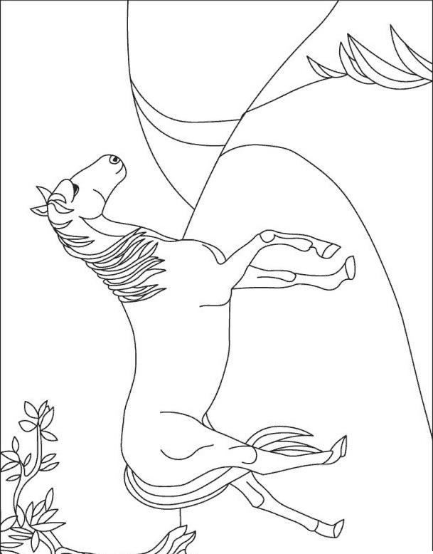 Cavallo da colorare 133