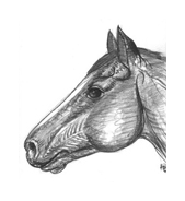 Cavallo da colorare 134