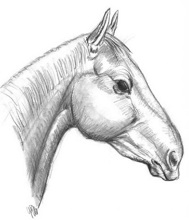 Cavallo da colorare 135