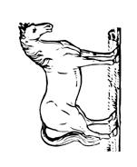 Cavallo da colorare 146