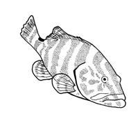 Pesce da colorare 14