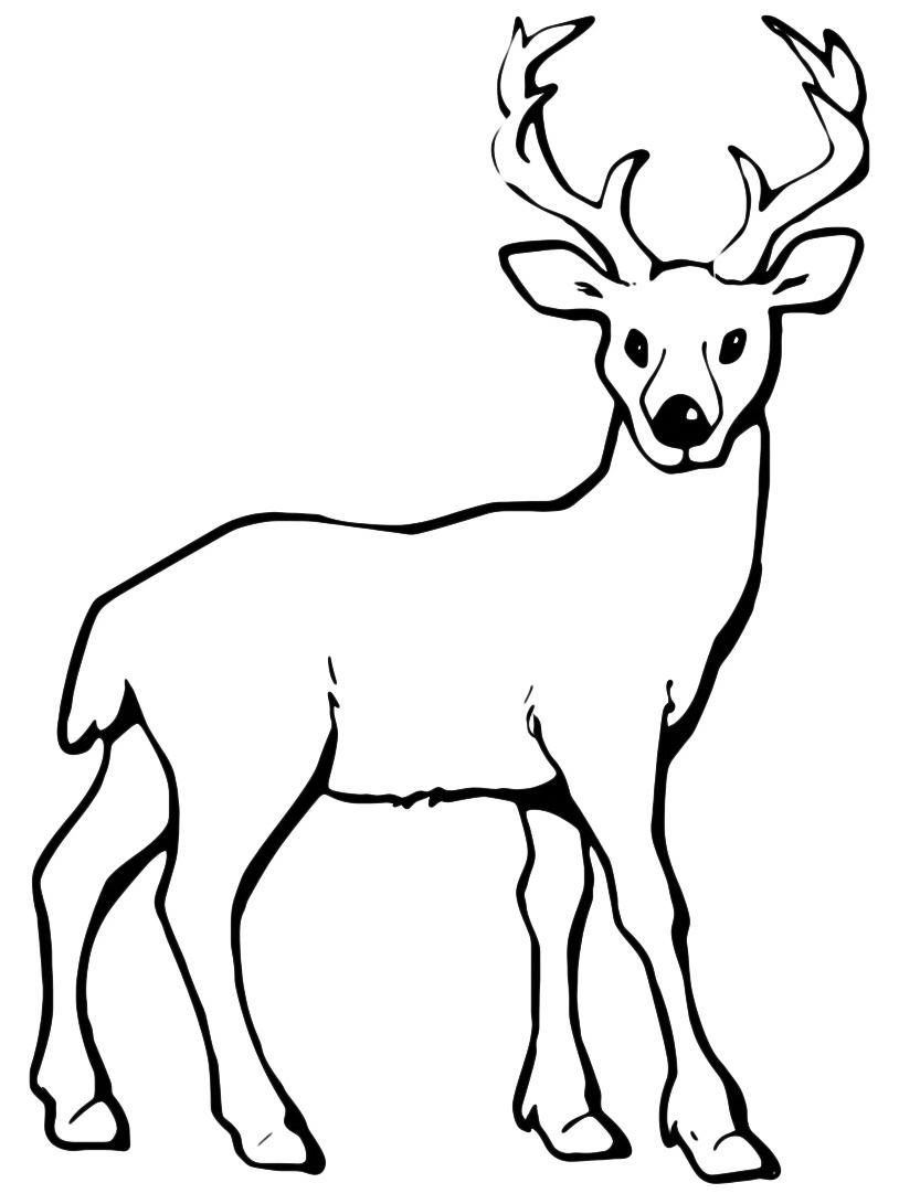 Alce e cervo da colorare 33