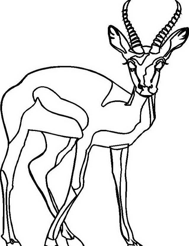 Animale da colorare 127