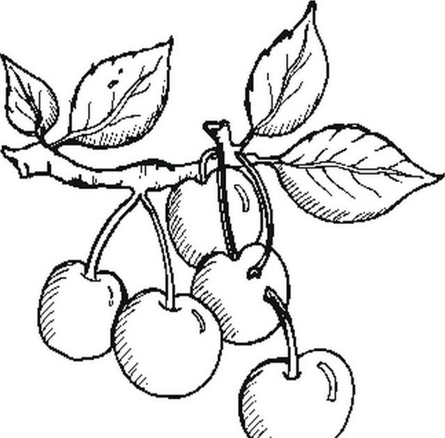 Frutto da colorare 15