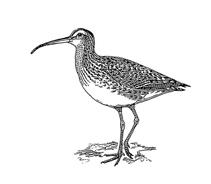 Uccello da colorare 26