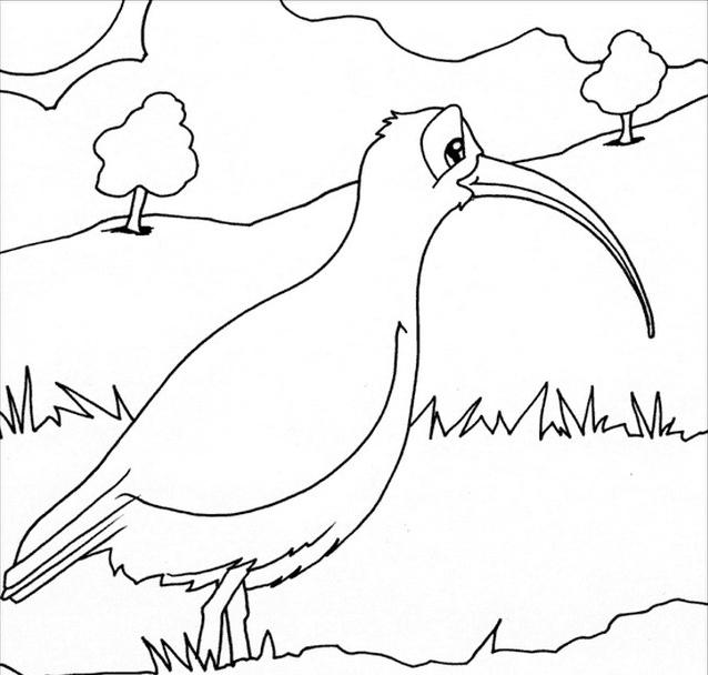 Uccello da colorare 27