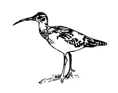 Uccello da colorare 28