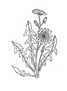 Arbusto da colorare 13