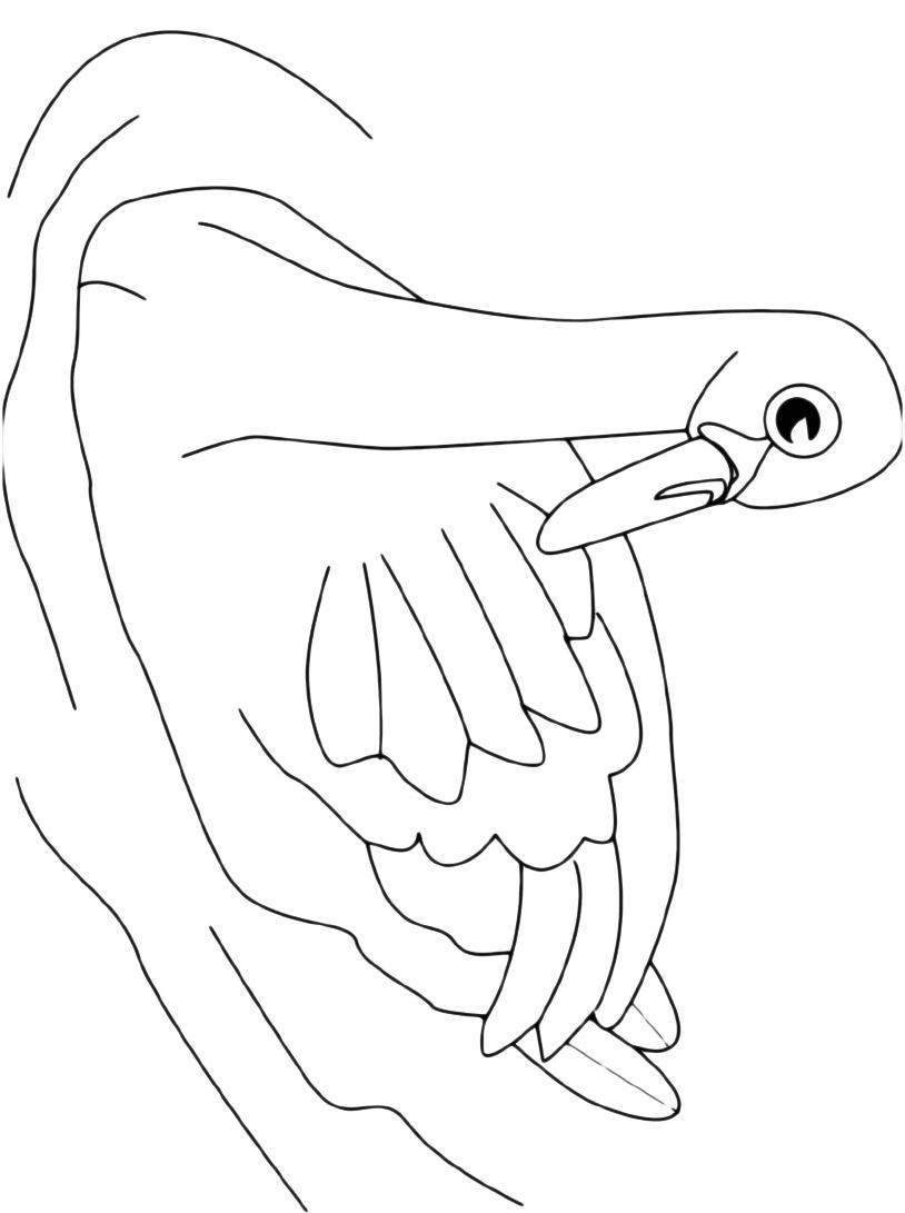 Cigno da colorare 4