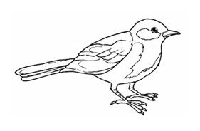 Uccello da colorare 31