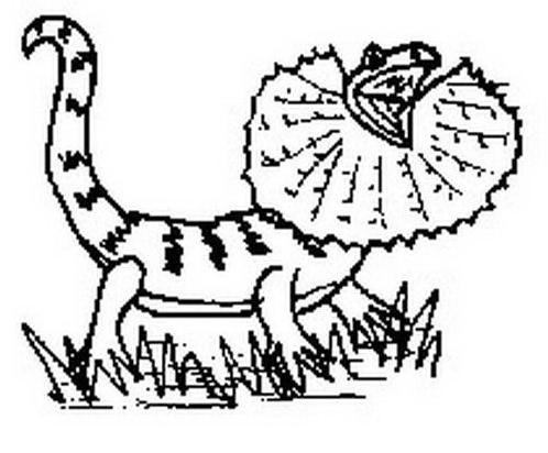 Dinosauro da colorare 21