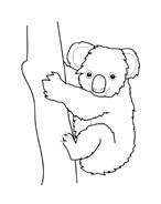 Koala da colorare 7