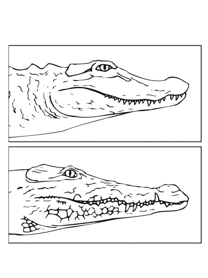 Coccodrillo da colorare 11