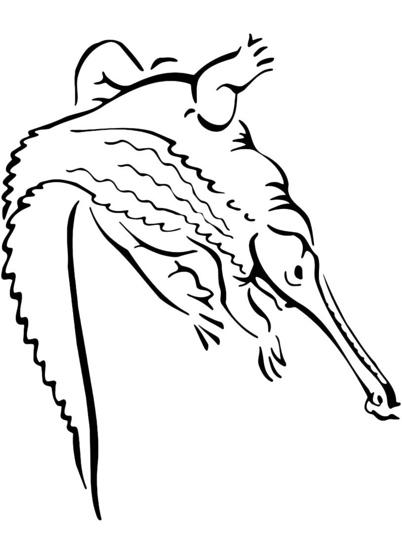 Coccodrillo da colorare 27
