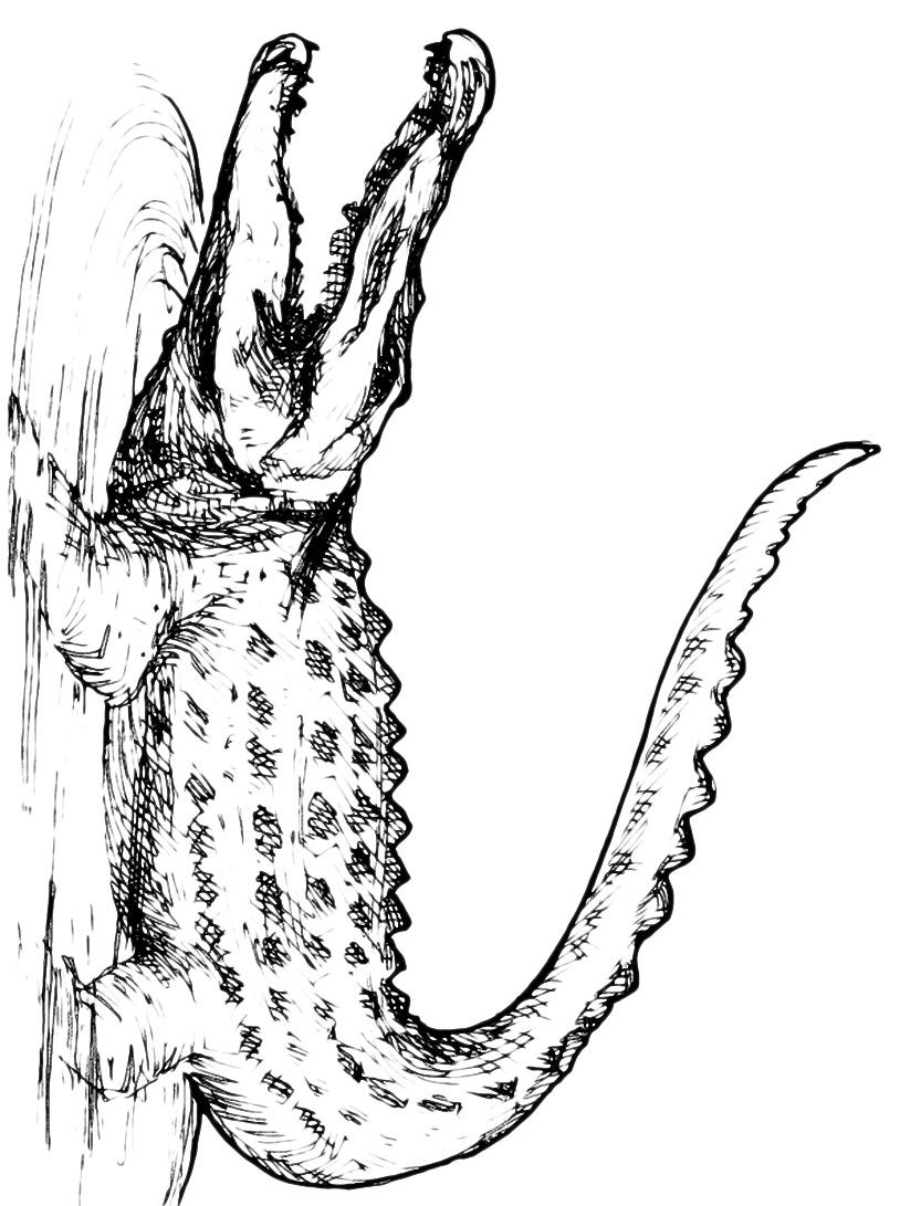 Coccodrillo da colorare 30