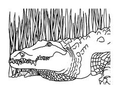 Coccodrillo da colorare 31