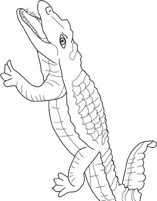 Coccodrillo da colorare 33