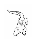 Coccodrillo da colorare 40