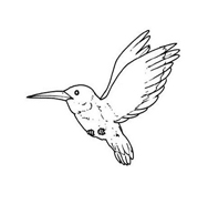 Uccello da colorare 32