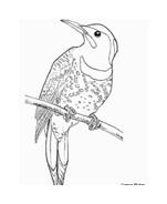 Uccello da colorare 33