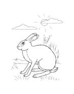 Coniglio da colorare 6
