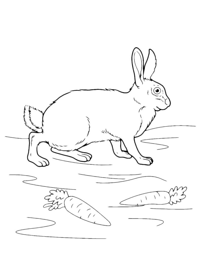 Coniglio da colorare 7