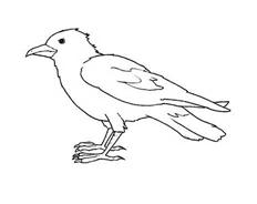 Uccello da colorare 34