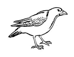 Uccello da colorare 38