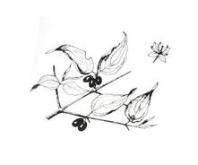 Arbusto da colorare 16