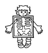 Corpo umano da colorare 33