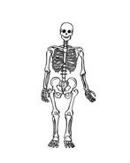 Corpo umano da colorare 46