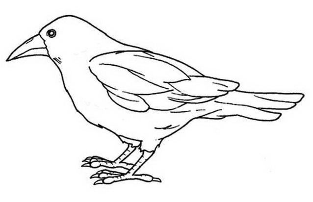 Uccello da colorare 44