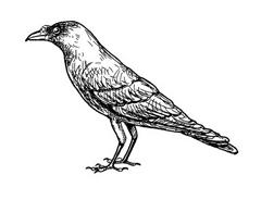 Uccello da colorare 45