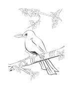 Uccello da colorare 46