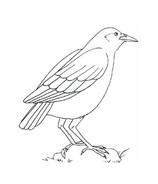 Uccello da colorare 47