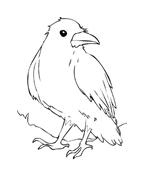 Uccello da colorare 48