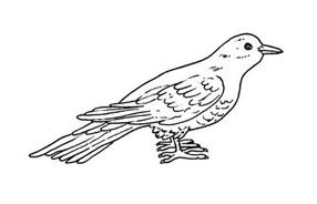 Uccello da colorare 50