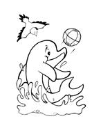 Delfino da colorare 12