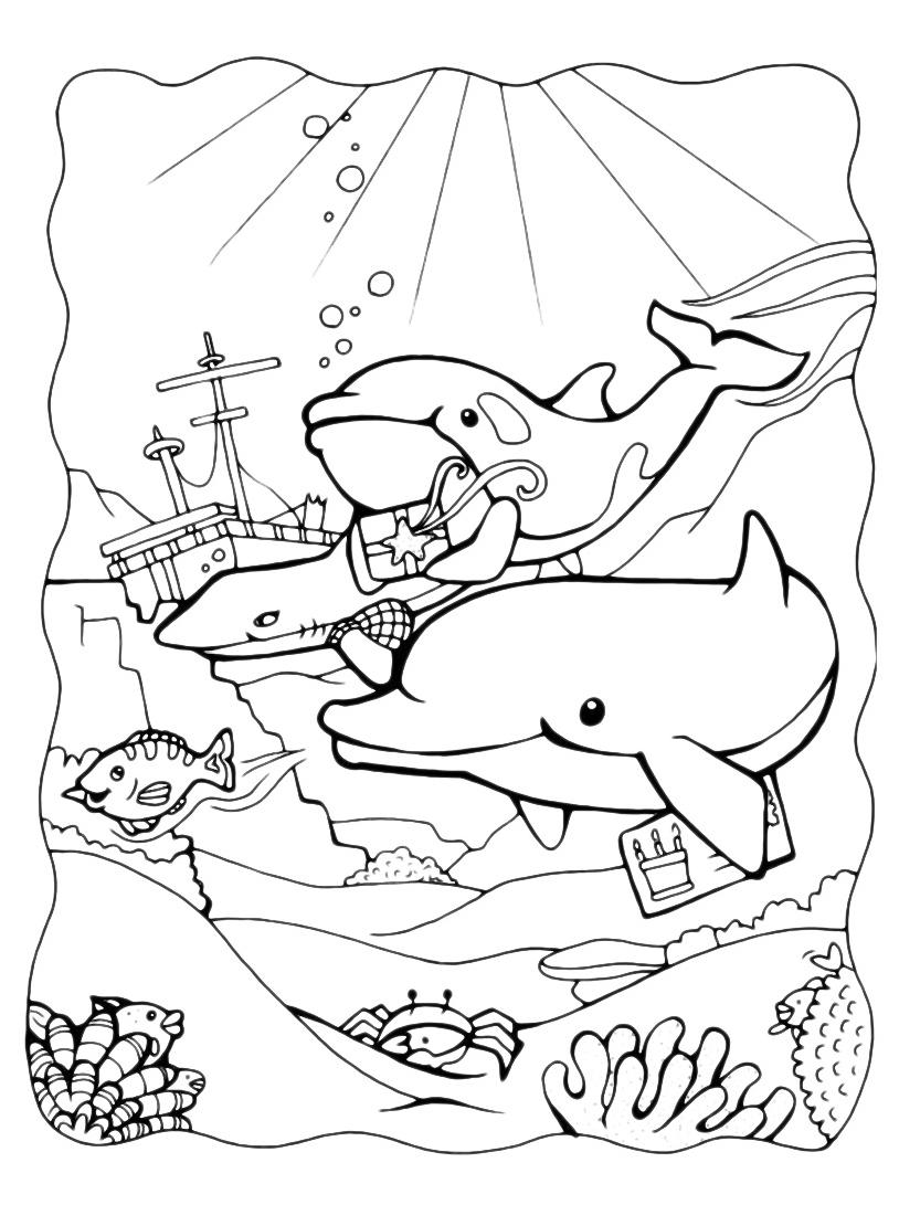 Delfino da colorare 20