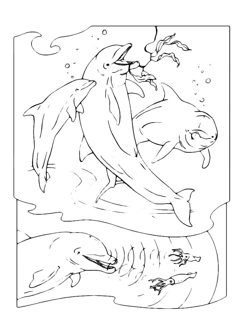 Delfino da colorare 21