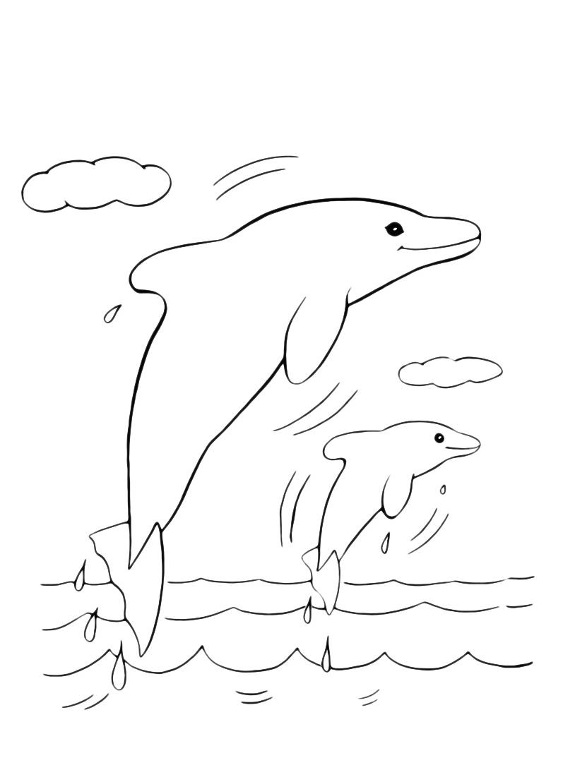 Delfino da colorare 23