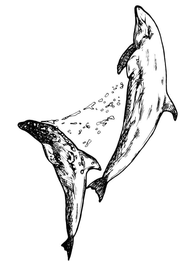 Delfino da colorare 28