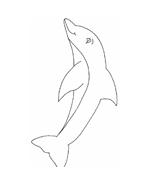 Delfino da colorare 43